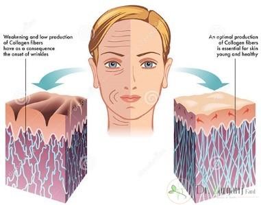 کلاژن ( collagen) :