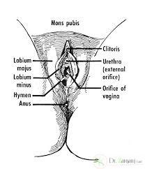 انواع مختلف کیست واژن