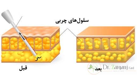 هورمون های رشد روی بافت های بدن، تأثیر هایی مانند موارد زیر می گذارند: