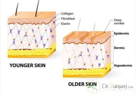 کلاژن چیست و از چه طریقی می توان کلاژن سازی را تحریک کرد؟